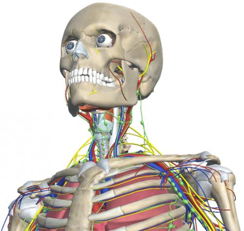 Acceso al Atlas de anatomia