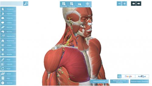 Anatomía 3D